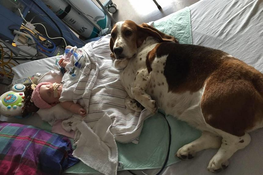 One of the dogs pictured laying beside five-month-old Nora Hall at the hospital.