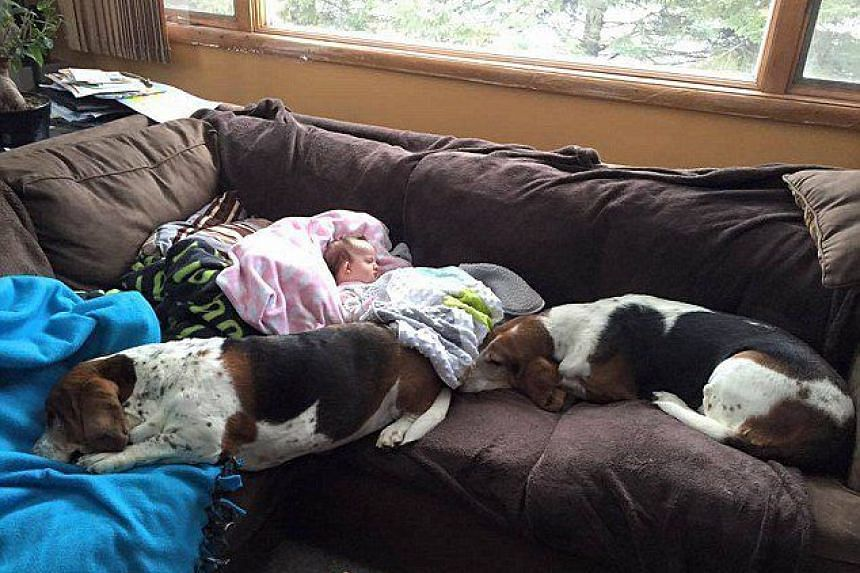 The dogs seen laying beside Nora Hall at home, before she suffered a stroke.