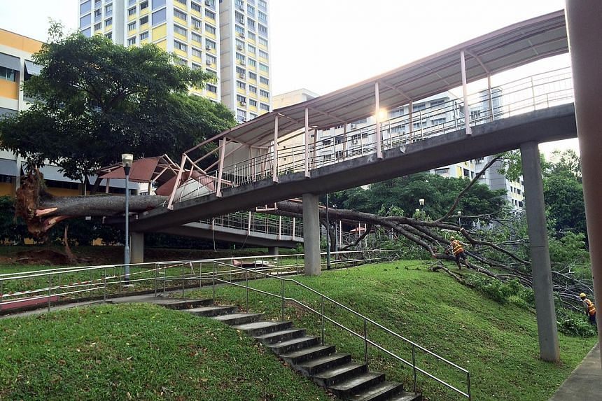 A tree that toppled over crushed the railings and shelter along a section of the pedestrian overhead bridge in Braddell Road. The tree is suspected to have fallen over as a result of the recent downpour, says the Bishan-Toa Payoh Town Council.