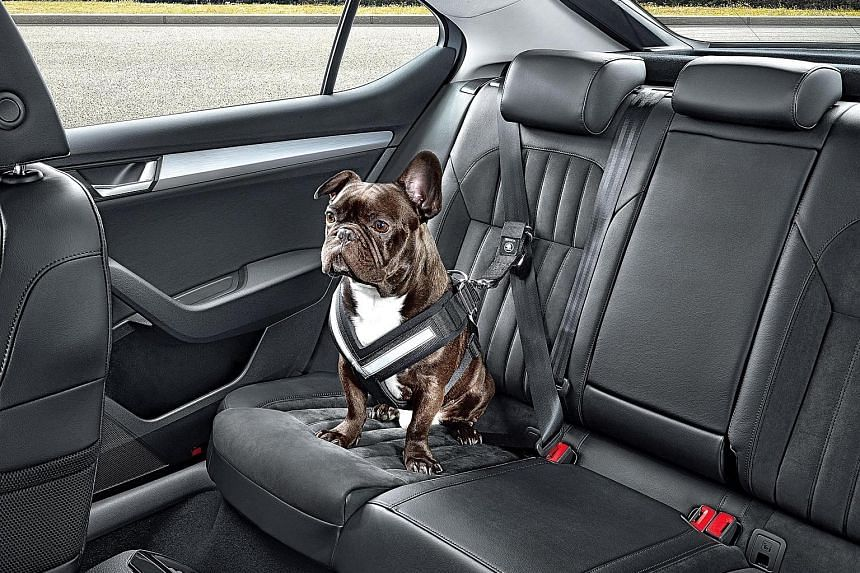 Dogs can travel safely by wearing a harness and seat belt (above) or staying inside a crate or a dog guard.