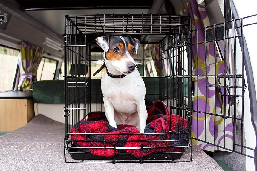 Dogs can travel safely by wearing a harness and seat belt or staying inside a crate (above) or a dog guard.