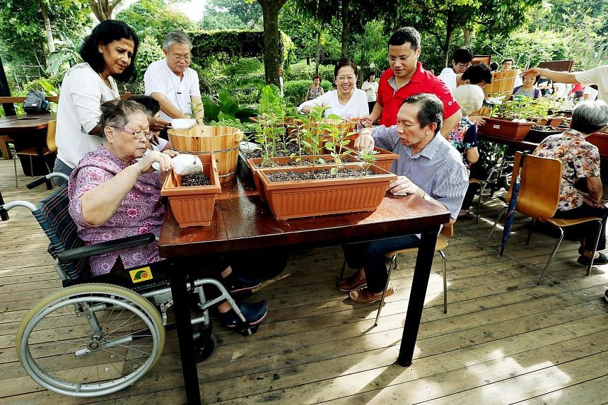 Madam Soh (left) and Mr Lim Say Phang, 61, doing some gardening at HortPark's therapeutic garden yesterday, as Alzheimer's Disease Association volunteer Kamala Samy M.L.,62, and Senior Minister of State Desmond Lee (in red) look on. Mr Lee said there