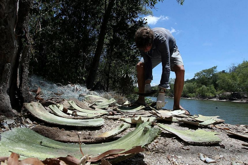 An environmentalist looking at turtle shells on an island off the coast of Terengganu. In the background are discarded fishing nets. Fishermen dumped the turtle carcasses secretly as they could get into trouble for laying out nets illegally near the