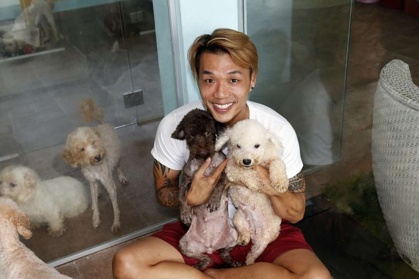 Voices for Animals president Derrick Tan with rescued dogs at a temporary boarding facility in Bukit Timah.