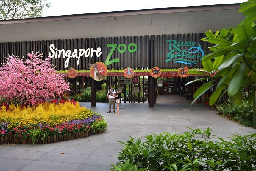 The Friends of Wildlife (FOW) membership allows unlimited visits to four parks: Jurong Bird Park, Night Safari, River Safari and Singapore Zoo.