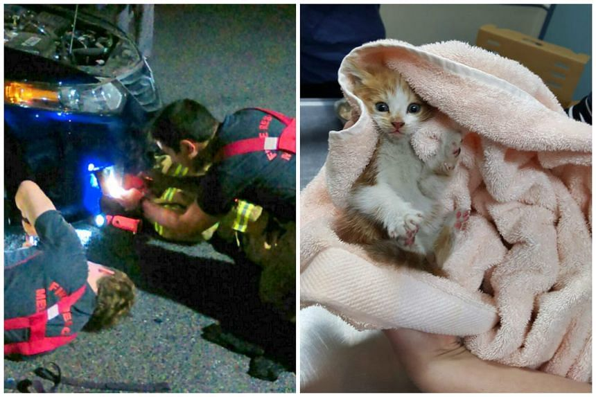 Officers from the Melbourne Metropolitan Fire Brigade took more than one hour to locate and extricate the kitten from inside the car.