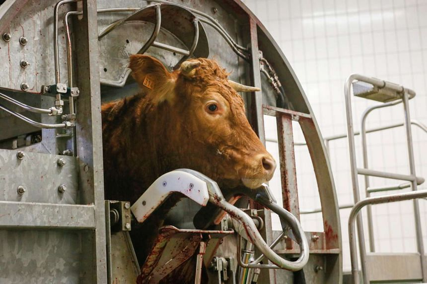 The overuse of antibiotics should be reduced by cutting the vast quantities of medicines given to farm animals.
