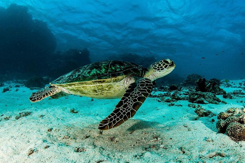 """Australia's Great Barrier Reef could be beyond saving in five years without """"now or never"""" funding to improve water quality as climate change ravages the World Heritage-listed site."""