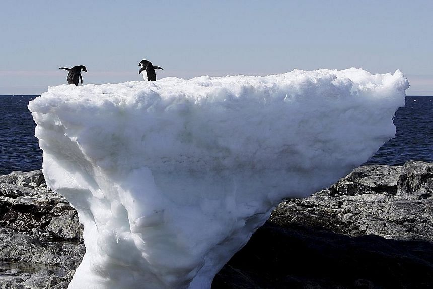 Two Adelie penguins standing atop a block of melting ice on a rocky shoreline at Cape Denison, Commonwealth Bay. According to researchers, the underbelly of the Totten Glacier in East Antarctica is being eroded by warm, salty sea water flowing hundre
