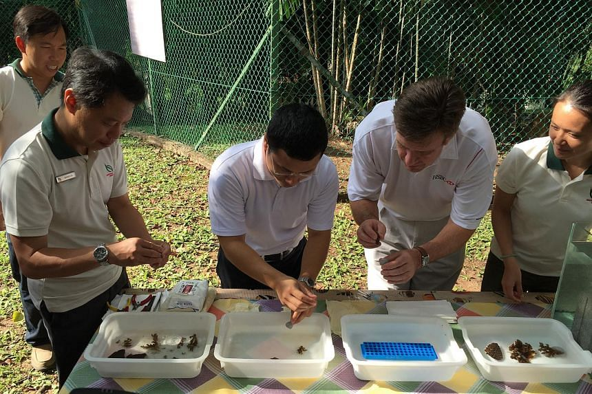 (Foreground from left) NParks CEO Kenneth Er, SMS for National Development Desmond Lee and HSBC CEO Guy Harvey-Samuel preparing coral nubbins for transplanting at the Marine Park Outreach and Education Centre on St John's Island.