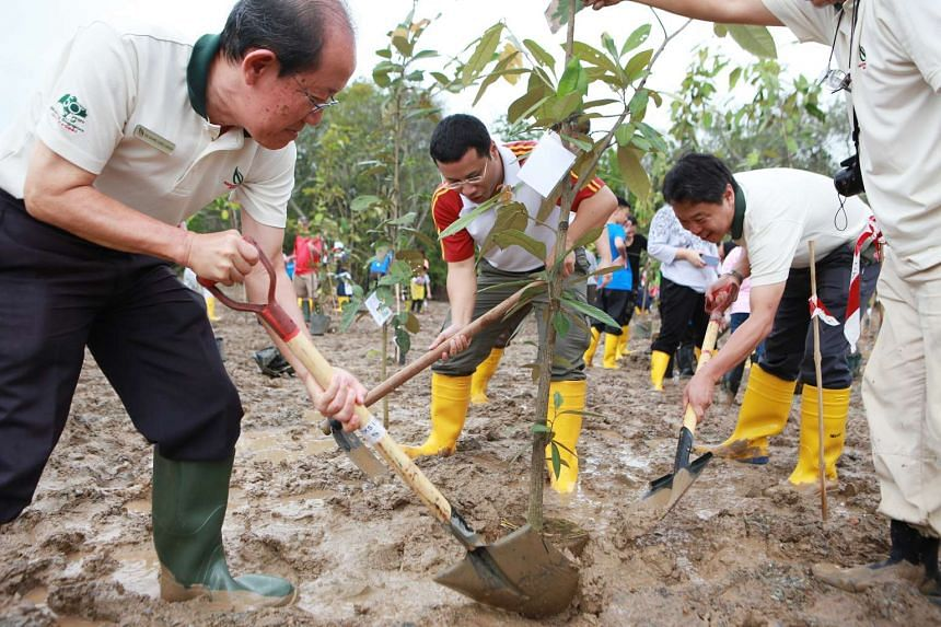 Senior Minister of State for Home Affairs and National Development Desmond Lee (centre) planting mangrove saplings at the new mangrove arboretum in the Ubin Living Lab.