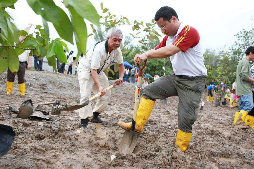 Senior Minister of State for Home Affairs and National Development Desmond Lee (right) planting mangrove saplings at the new mangrove arboretum in the Ubin Living Lab.