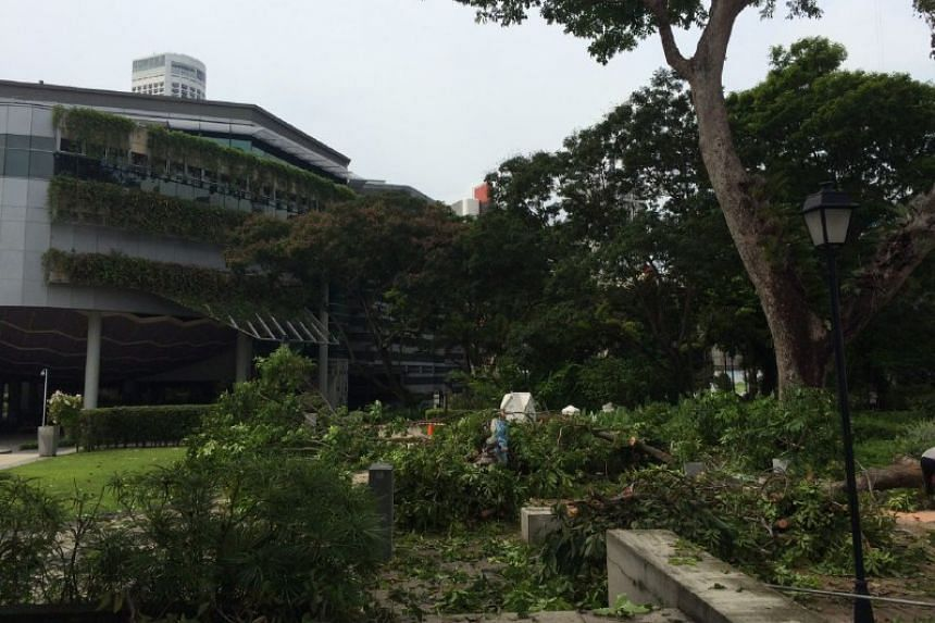 Contractors working to saw off damaged branches from the tree and clear debris at the front of the National Museum of Singapore.