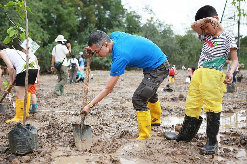 (Top) Mr Sean Lam, 47, and his son Leeuwin, nine, were among more than 100 participants who planted mangrove saplings in Pulau Ubin yesterday. (Above) An artist's impression of a coastal boardwalk of about 500m at Noordin Beach, one of the projects p