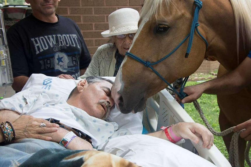 Terminally ill Vietnam War veteran Roberto Gonzalez asked to see his horses by his bedside, on May 21, 2016.