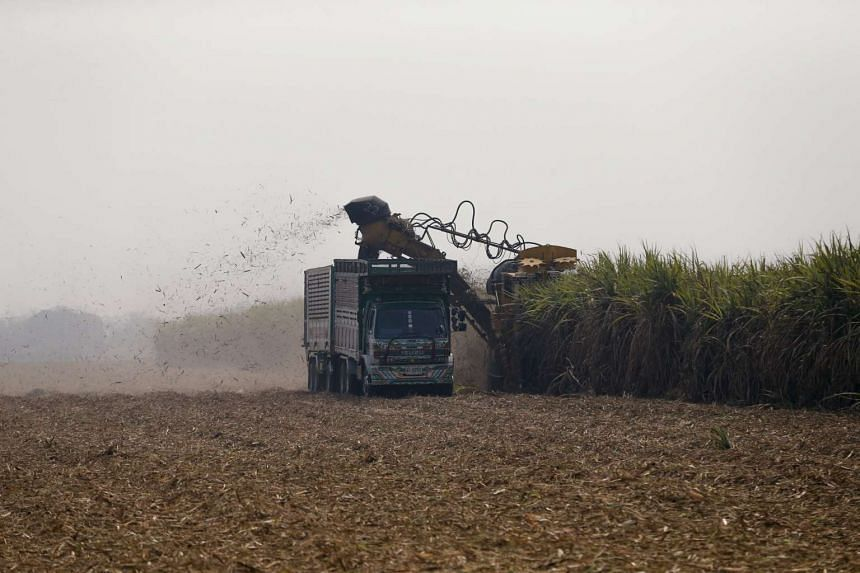 A truck and a tractor harvest sugar cane at Pakchong district in Thailand, on March 22, 2016. The strongest El Nino in nearly 20 years, which damaged crop production in Asia and caused food shortages, has ended.
