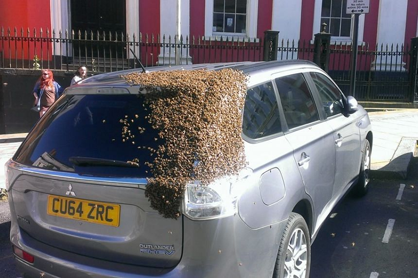 A swarm of bees covering the back end of a woman's car in Wales.