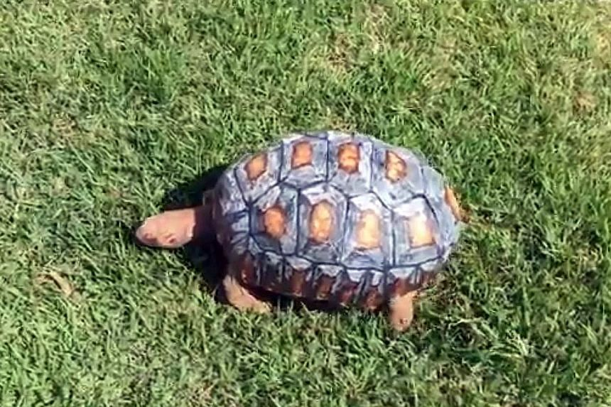 Fred the tortoise gained a new shell from four 3D-printed pieces, after it lost 85 per cent of its original one in a fire. The tortoise was named after horror character Freddy Krueger due to its burns.