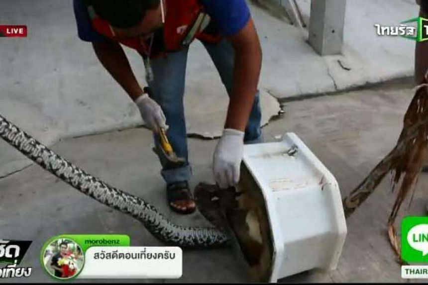 Rescue workers attempt to get a python stuck inside a squat toilet.
