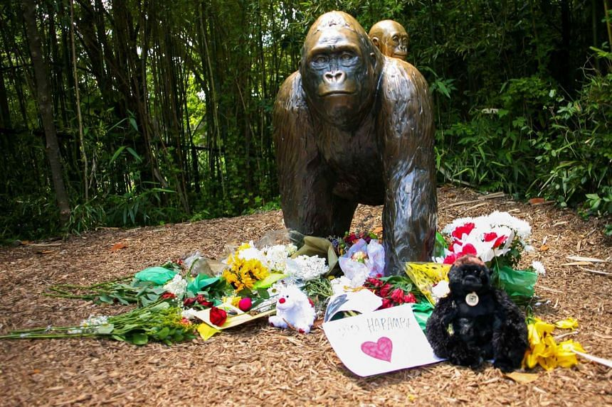 Flowers lay around a bronze statue of a gorilla and her baby outside the Cincinnati Zoo's Gorilla World exhibit, two days after officials were forced to kill Harambe, on May 30, 2016.