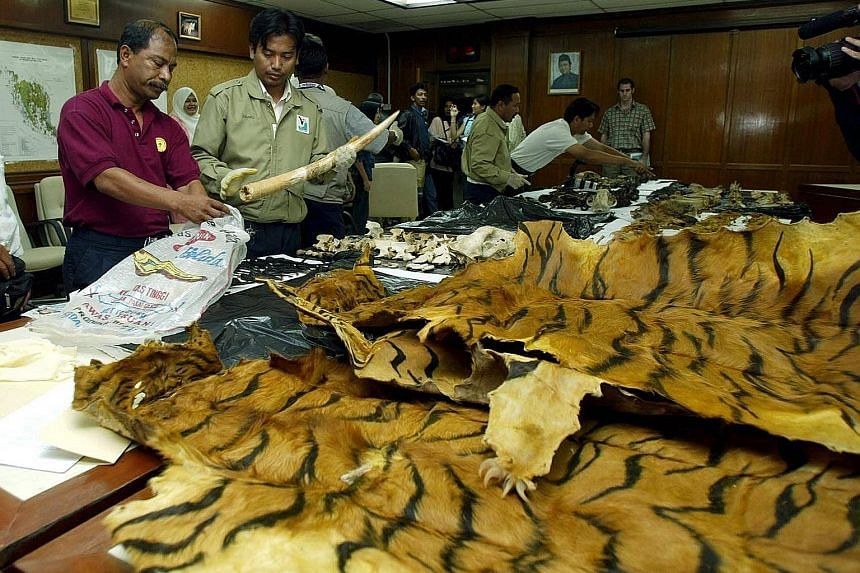 Poachers of Malaysian wildlife could soon be facing stiffer penalties and enforcement. Natural Resources and Environment Minister Wan Junaidi said the ministry was looking into equipping its officers with firearms as well as seeking to make amendment