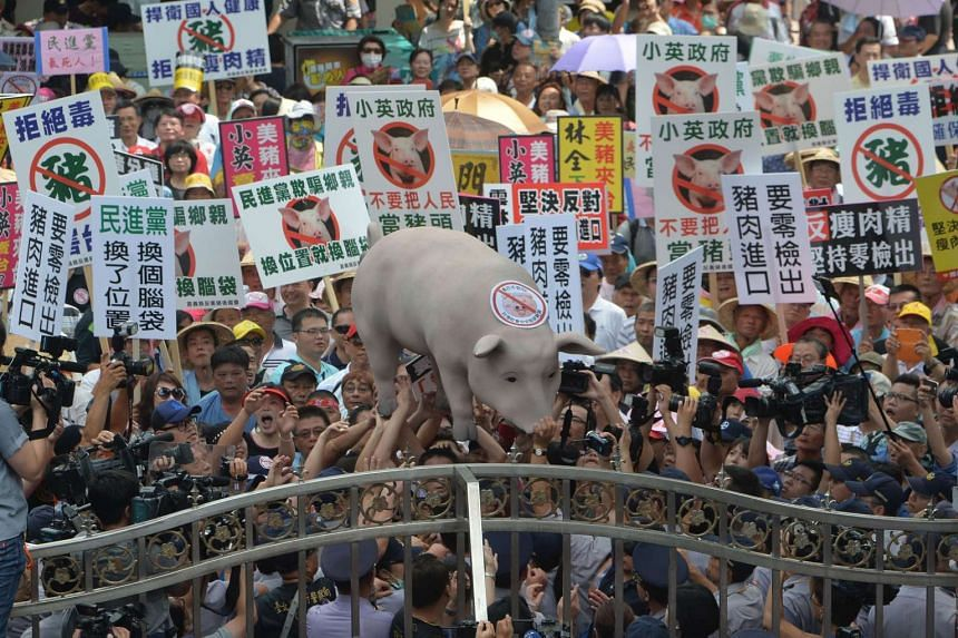 Taiwanese pig farmers demonstrate against government plans to import US pigs into Taiwan on May 31, 2016.
