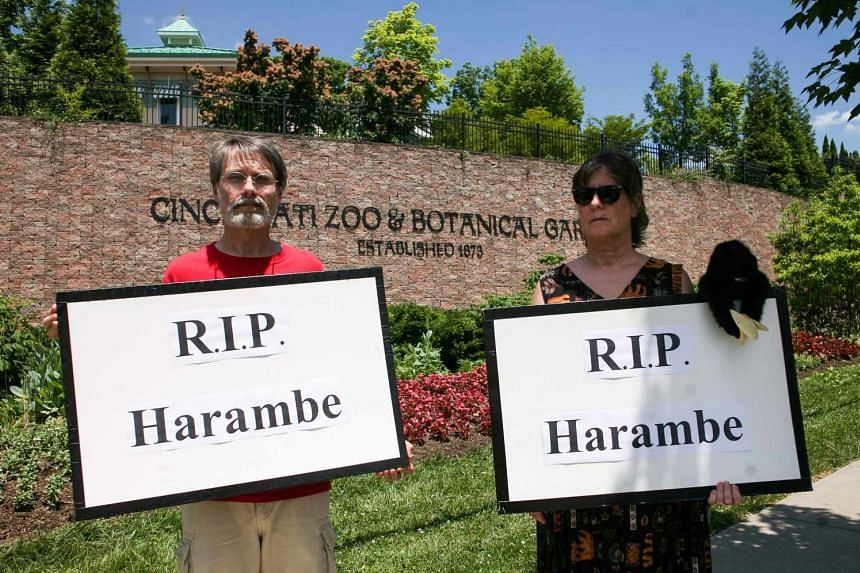 People attend a vigil outside the Cincinnati Zoo and Botanical Gardens, two days after a boy tumbled into its moat and officials were forced to kill Harambe, a Western lowland gorilla, in Cincinnati, Ohio, US on May 30, 2016.
