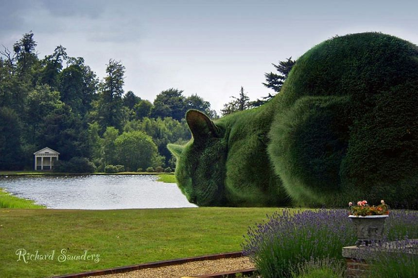 The first image of The Topiary Cat created by Richard Saunders.