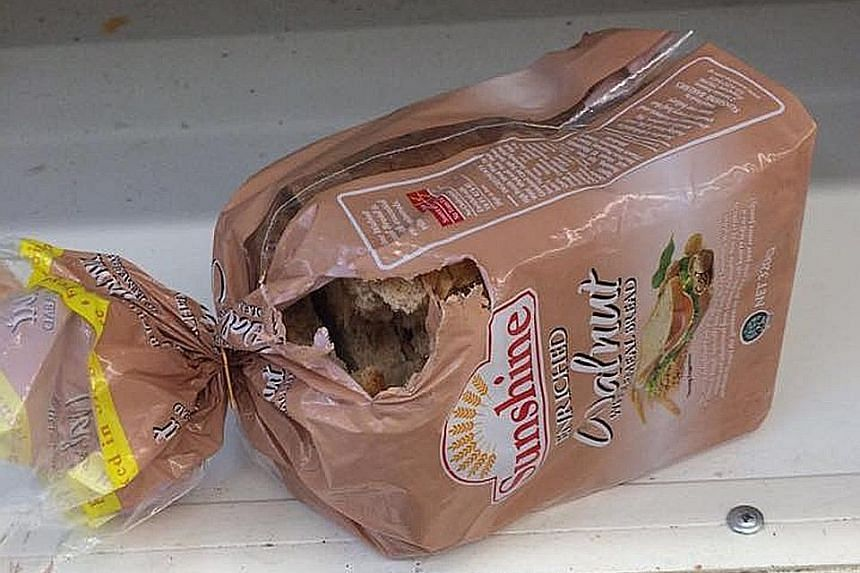 Mr Sun took a video of the rat scurrying around the bread section at the FairPrice outlet in Hougang's Kang Kar Mall, as well as a photo of a loaf of bread that had been gnawed.