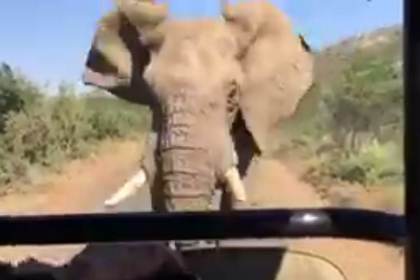 A screenshot of the video posted to Twitter by actor Arnold Schwarzenegger.