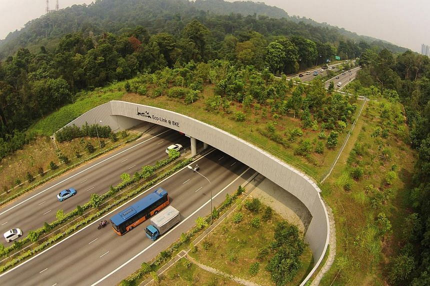 The Eco-Link@BKE was built to reconnect the Bukit Timah Nature Reserve and Central Catchment Nature Reserve to allow wildlife in both areas to safely cross the BKE.