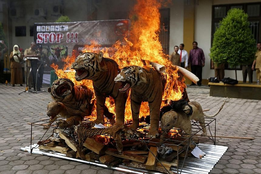 Confiscated items made from endangered animals being destroyed at the Aceh Forestry Ministry Office in Banda Aceh, Indonesia, last month. They were confiscated from poachers and illegal traders in Aceh as the government continues to fight the trade o