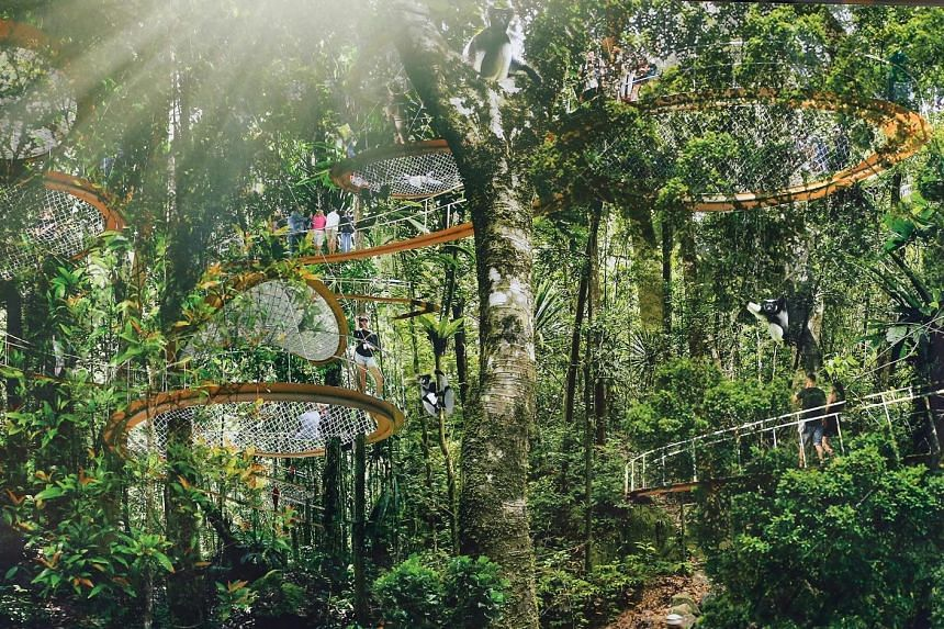 """An artist's impression of the Rainforest Park, where visitors will be able to stroll along aerial walkways. Mandai Safari Park Holdings is exploring a """"range of options"""" with the authorities to improve accessibility to the Mandai nature precinct."""
