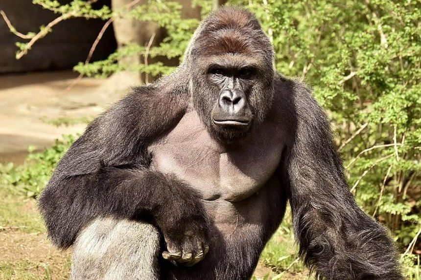Social media users were outraged over Harambe's death. The boy's mother, the zoo and some innocent people were targets of online abuse.