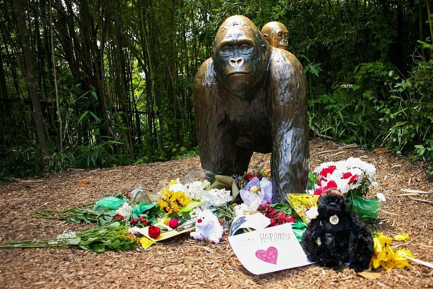 A bronze statue of a gorilla and her baby outside the Cincinnati Zoo's Gorilla World exhibit has become a memorial to male western lowland gorilla Harambe which was killed after a toddler tumbled into its moat on May 28.