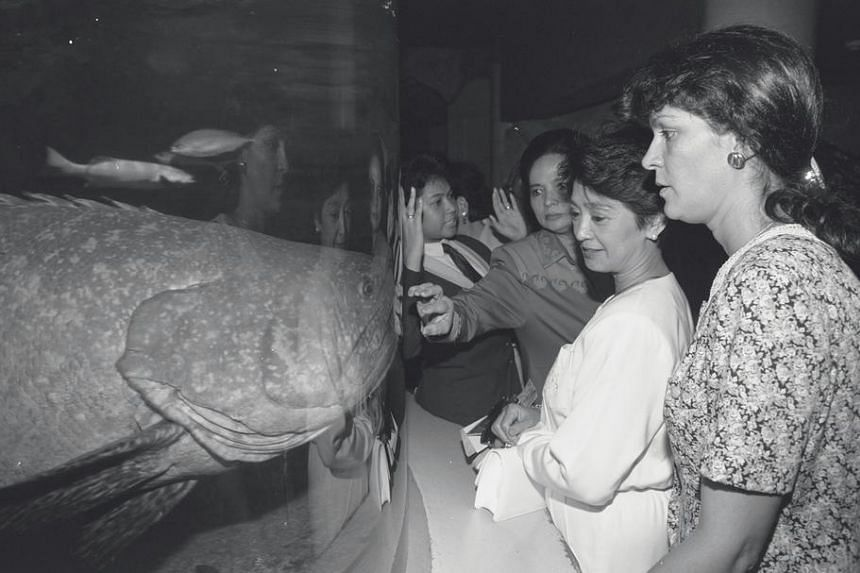 Mrs Junisa Alatas (third from right), wife of Indonesian Foreign Minister Ali Alatas, and Mrs Olivia Montinola Romulo (second from right) wife of Philippine Foreign Foreign Minister Roberto Romulo, facing up to a giant garoupa at Sentosa's Underwater
