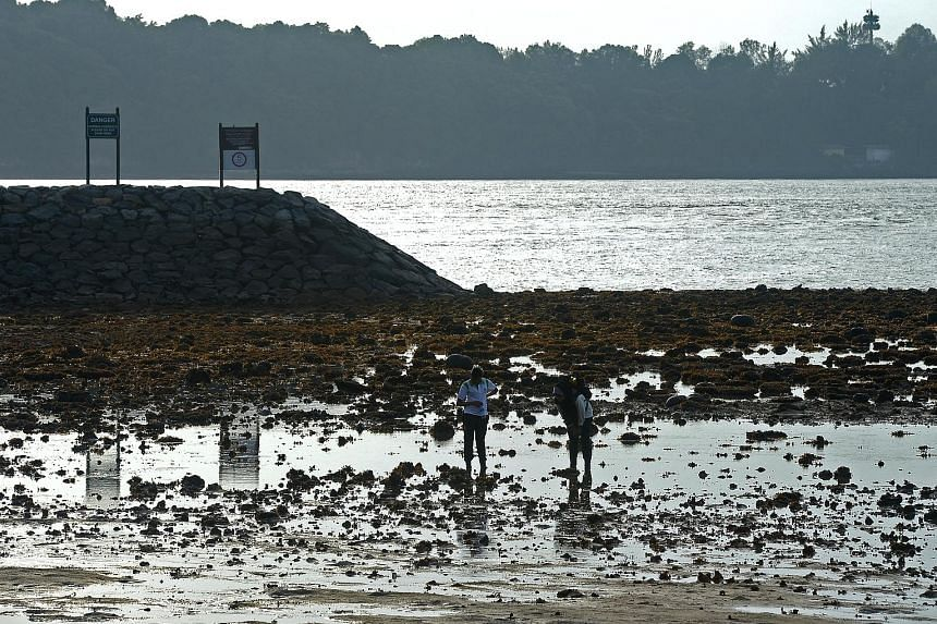 Plans for Sisters' Islands Marine Park include intertidal pools and boardwalks that will allow people to view marine life up close.