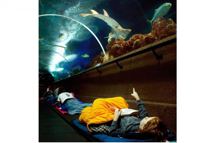 Participants of the Live In The Ocean at Underwater World Sentosa sleep in the aquarium tunnels, surrounded by thousands of marine creatures.