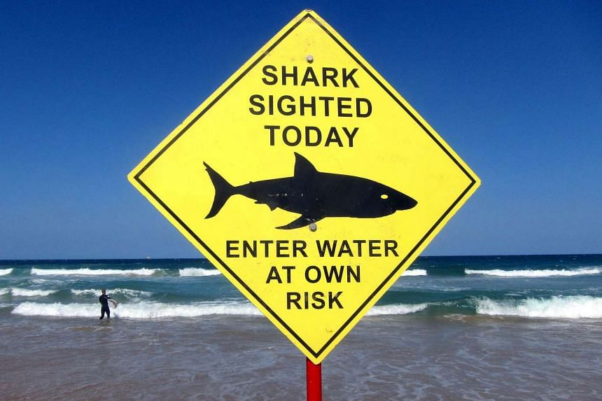 A sign declaring a shark sighting on Sydney's Manly Beach, in Australia, on Nov 24, 2015.