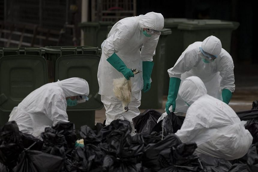 Workers in protective gear culling chickens at the Cheung Sha Wan Temporary Wholesale Poultry Market in Hong Kong on June 7.