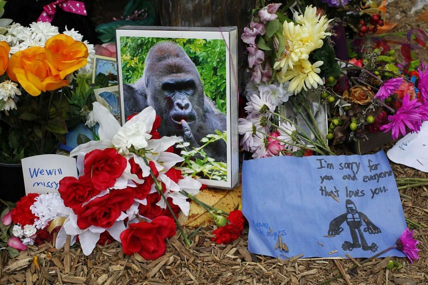 Flowers lay around a bronze statue of a gorilla outside the Cincinnati Zoo days after a 3-year-old boy fell into the moat and officials were forced to kill a gorilla.