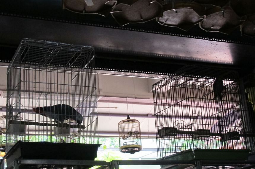 African grey parrots in a pet shop in Singapore. The birds, which make up the bulk of the aviculture trade passing through Singapore, are popular for their intelligence and speaking ability. As a result, their numbers have been decimated in parts of their