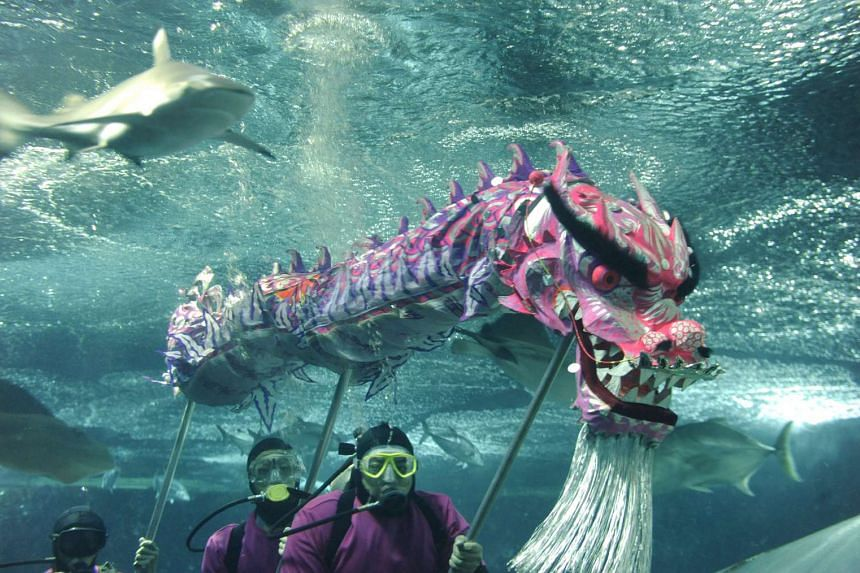 Divers from Sentosa's Underwater World Singapore performing an underwater dragon dance in 2012.