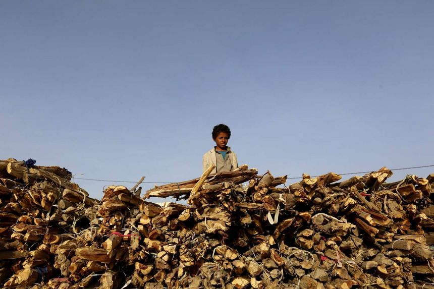 A young Yemeni displays firewood for sale for cooking purposes as gas prices remain high in Sana'a, Yemen, on June 7, 2016.