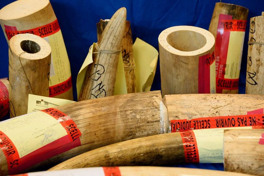ba593cfb6146 Video hints Japan abetting illegal ivory trade  Conservationists ...