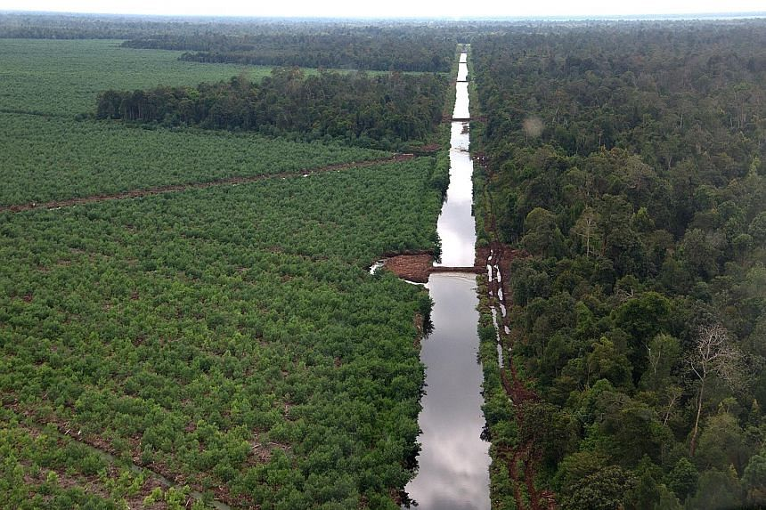 Canal blocking on concession land belonging to an APP supplier in the Kerumutan province, Riau. Canal blocking prevents peatland from drying out and igniting. Indonesia's Peatland Restoration Agency says it is still waiting for the paper giant to sub