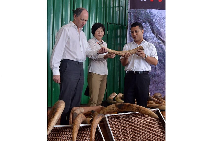 Mr Desmond Lee (right), Senior Minister of State for National Development and Home Affairs, inspecting elephant ivory at Tuas South Street 7.