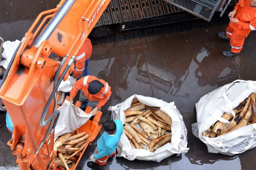 Elephant ivory seized from various detections in recent years are crushed at Tuas South Street 7.