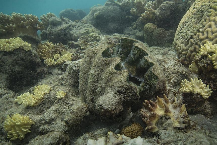 Corals destroyed by bleaching at Lizard Island on the Great Barrier Reef last month.