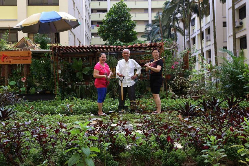 Tampines Greenvale RC gardeners (from left) include Madam Ng Choon Kim, 56, Mr Abdul Ngalim, 66, and Madam Eng Lay Lee, 50. Their community garden won NParks' Diamond Award.